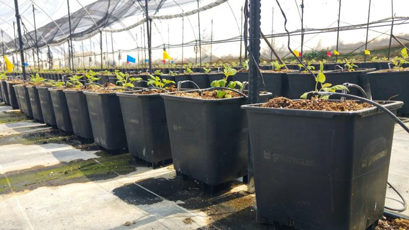 greenvass presenta su nueva línea de macetas para cultivo
